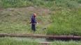 Смольный косил траву и откачивал воду с территории ...