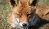 Комитет по природопользованию проведет семинары о животном мире в Петербурге