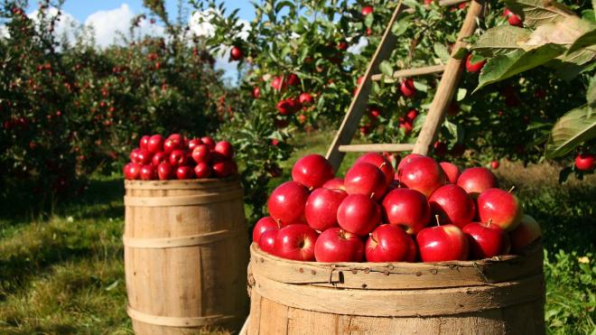 Выборгский район занимает 2 место по объему реализованной сельхозпродукции в Ленобласти