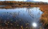 В Новгородской области болото засосало жителя Купчино
