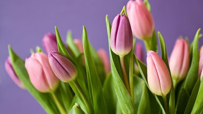 В Ленобласти высадили 2 миллиона роз и тюльпанов к 8 марта