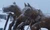Житель Якутии слепил из навоза две скульптуры лошадей к году Лошади