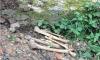 В Гатчине на теплотрассе нашли человеческие кости