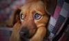 Петербургские зооактивисты за год спасли900 кошек и 40 собак
