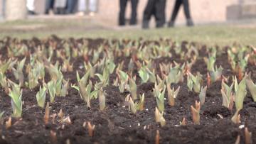 Для трех районов Петербурга закупят цветы на 8,8 млн рублей