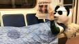 В петербургском метро заметили читающую газету панду