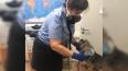 В Пулково проверили более двух тысяч кошек и собак ...