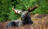 Право на охоту в лесах области отобрали у 34 человек