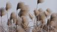 В Петербурге 20 января ожидается усиление ветра порывами ...