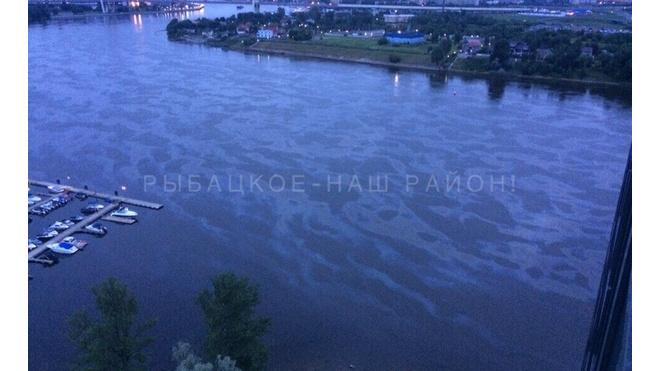 Петербуржцы засняли масляные пятна на Неве