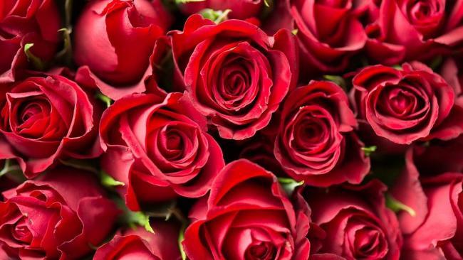 В Петербург и Ленобласть доставили более 4 млн цветов с начала года