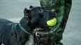 Томские догхантеры отравили известную собаку Багги, ...