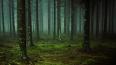 В лесу в Подмосковье нашли человеческий скелет