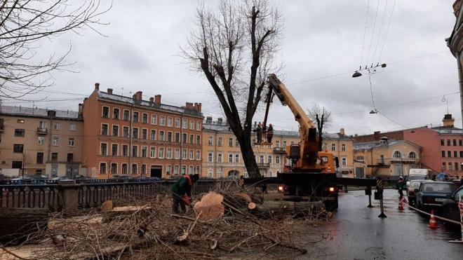 Петербуржцы не смогли отстоять деревья на набережной Грибоедова