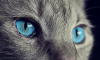 Без кота и жизнь не та: в Петербурге бесплатно раздадут котов
