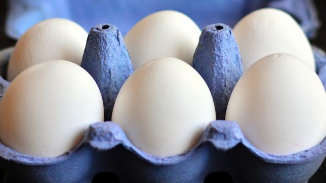 Ленобласть увеличит долю экспорта рыбы, мяса, молока и зерна за границу