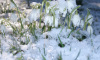 Температура в Петербурге не смогла подняться до рекордной отметки