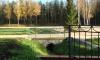 Петербуржцы смогут наносить деревья на интерактивную карту города