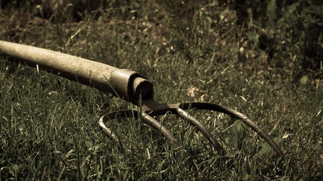 В Ленобласти мужчина убил родного брата вилами