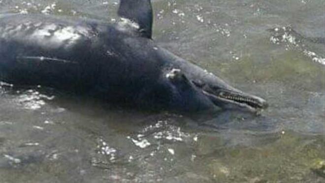 В Египте отдыхающие на пляже нашли 11 трупов дельфинов