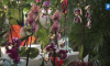 Ботанический сад продлит работу 14 февраля в честь праздника