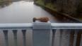 На мосту через Охту обнаружили мину времен войны. ...