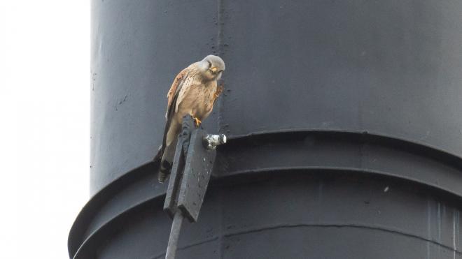 В Петербурге заметили трех редких птиц из Красной книги