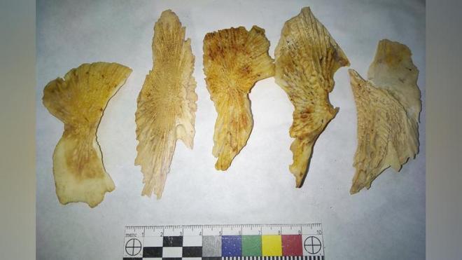 При раскопках в Петербурге обнаружили более 10 тысяч артефактов