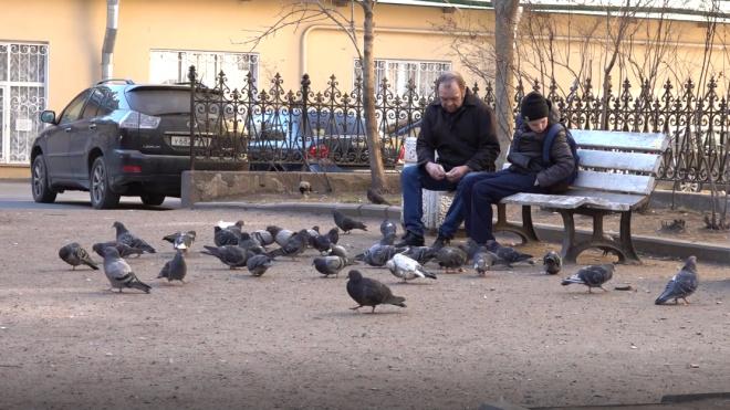 Во вторник в Петербурге ожидается плюсовая температура и сильный ветер