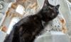 Эрмитаж попал в список мест, обязательных к посещению котолюбов