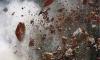В Приамурье комбат погиб, спасая солдата от взрыва