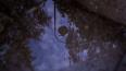 Петербурженка нашла труп на дереве у Верхнего Суздальского ...