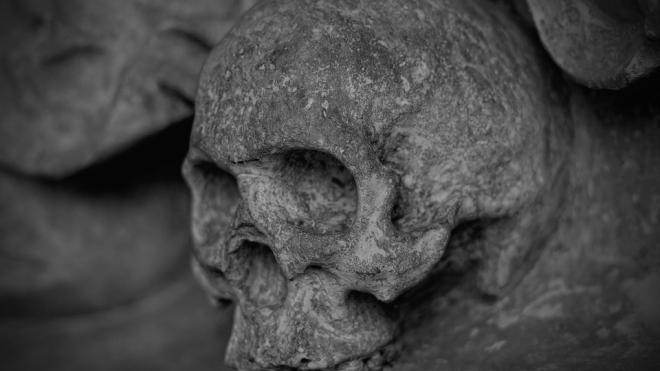 Во Всеволожском районе на частном участке обнаружен череп с сохранившимся волосяным покровом
