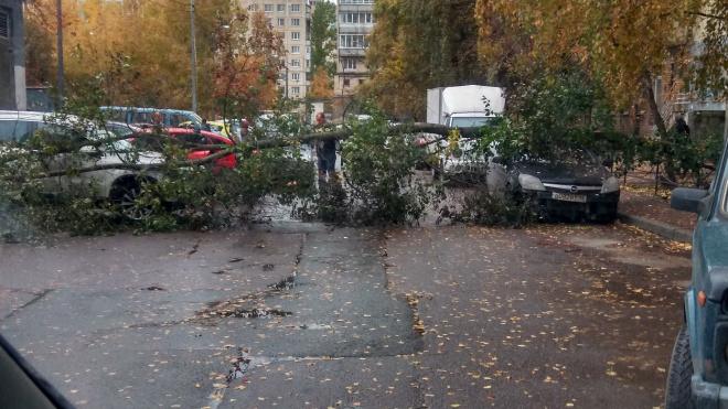 В Красногвардейском районе дерево рухнуло на припаркованный автомобиль
