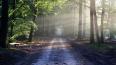 Леса Ленобласти закрыли для посещения