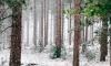 В Ленобласти осень закончится мокрым снегом и гололедицей