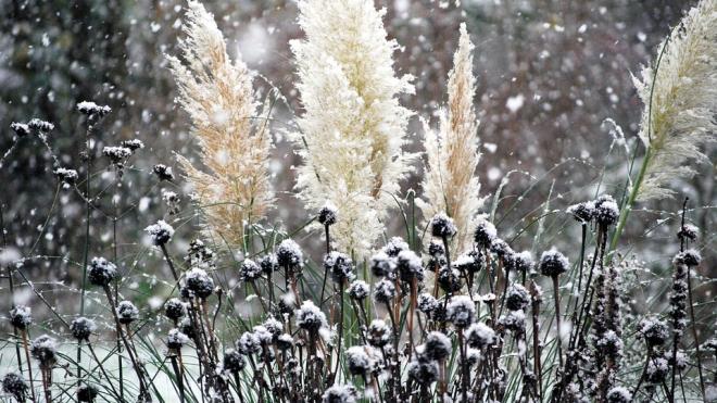 В Петербурге в выходные ожидается дождь со снегом