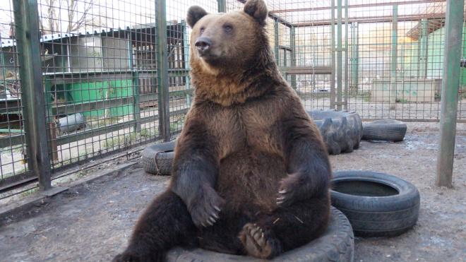 """""""Велес"""" просит петербуржцев помочь с яблоками и морковкой для мишек"""