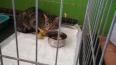 Петербургские волонтеры вызволили котенка из фонаря-лову...