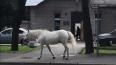 В Павловске заметили бесхозную лошадь в костюме единорог...
