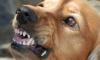 В Иркутской области собака сорвалась с цепи и укусила 2-летнего мальчика
