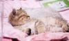 """Клуб молодой семьи в Выборге """"Ясень""""проводит социальную акцию """"Мур-мур счастье!"""""""