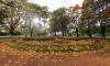 В погодном центре опровергли приближение метели к Петербургу