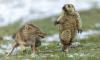 """""""Момент"""": Названа самая лучшая фотография дикой природы за 2019 год"""