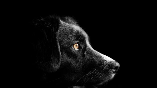 Полиция задержала жителя Красного Бора, застрелившего собаку из своего окна