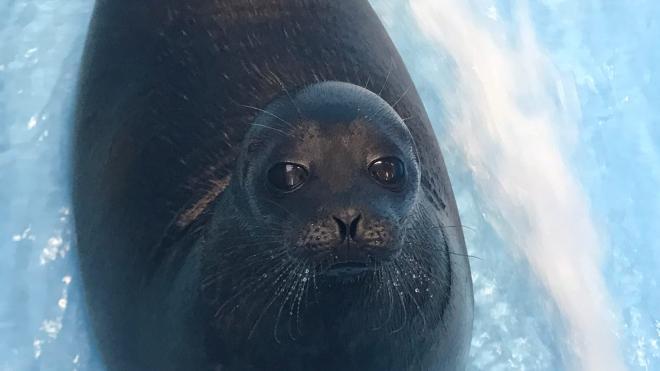 Тюленей Крошика и Шлиссика переместили в дом из-за холодов