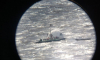 Петербуржцы пожарили шашлыки на плоту посреди Финского залива