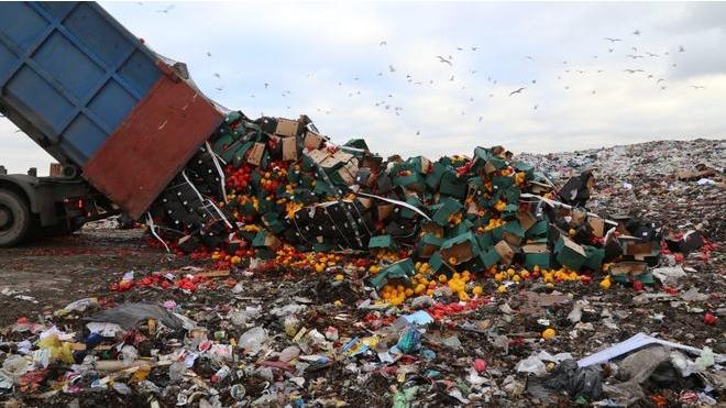 Петербуржцы возмущены уничтожением 14 тонн санкционного перца в Гатчинском районе