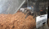Из Петербурга в Магадан полетели четыре ядовитых паука-птицееда