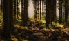 Леноблась обогатилась сотней гектаров леса